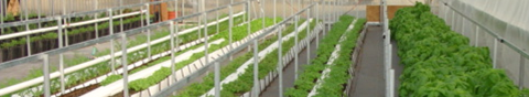 Tyson_greenhouse