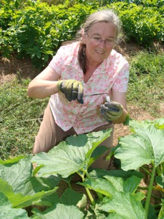 Louise Divine at her farm collecting squash bees