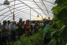 The greenhouse vegetable demonstration